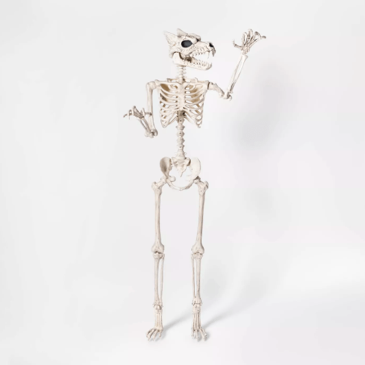 A werewolf skeleton posed as though it's attacking in front of a white background.