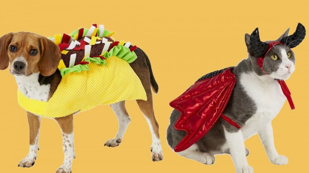 [2020] 25 Awesome Pet Halloween Costumes You Can Buy Right Now
