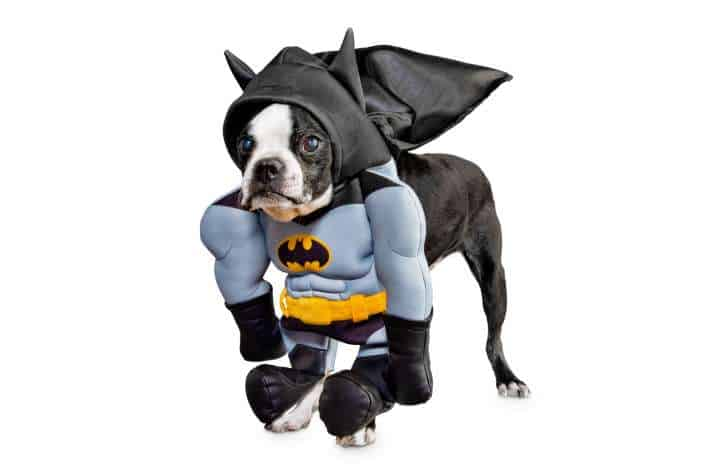 Best Pet Halloween Costumes. Batman Dog Costume.