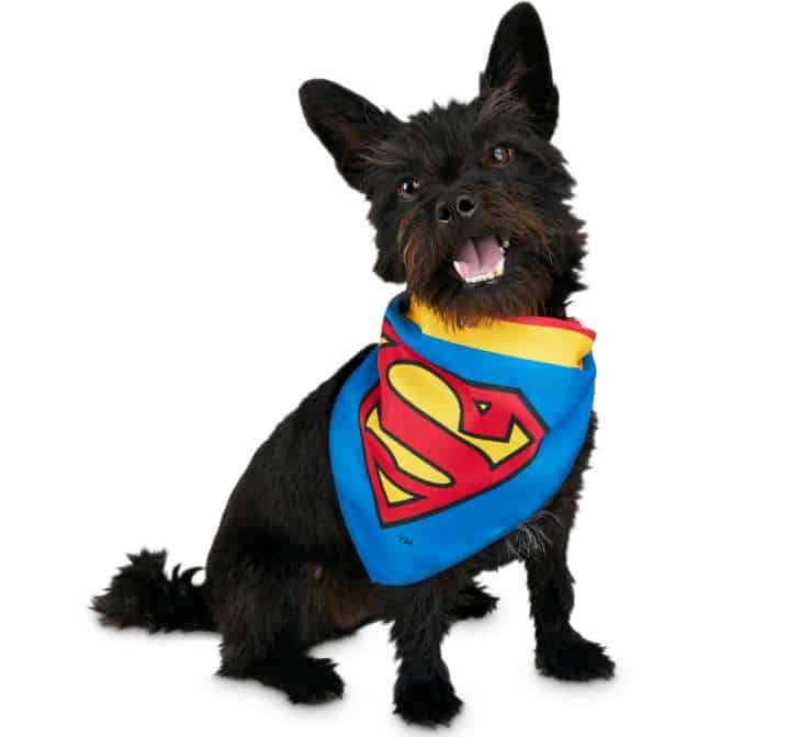 Best Pet Halloween Costumes. Superman Dog Costume.
