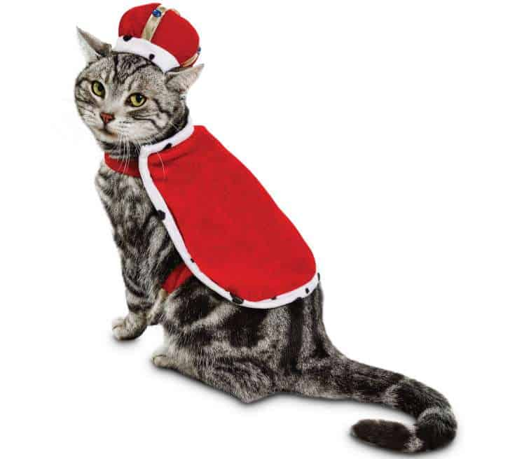 Get the best cat halloween costumes of 2019.
