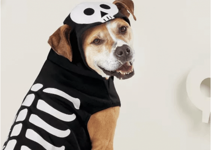 Skeleton hoodie Halloween costume for dogs.