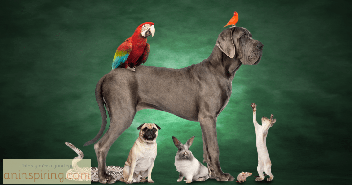 animal-lovers-feature-image